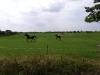 pferde1